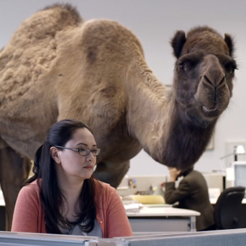 Hump Day Camel Gif Geico Camel Hump Day