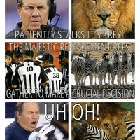 The Majestic Replacement Refs
