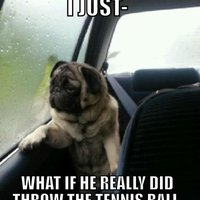 Introspective Pug
