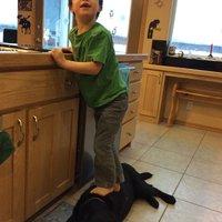 Sarah Palin's Dog Step Stool