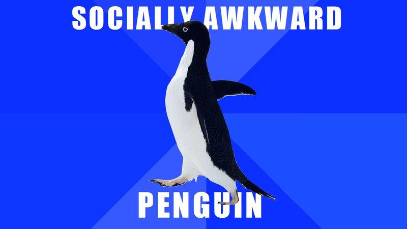 Socially Awkward Penguin | Know Your Meme