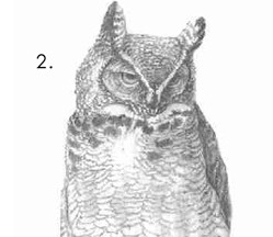How To Draw an Owl | Know Your Meme