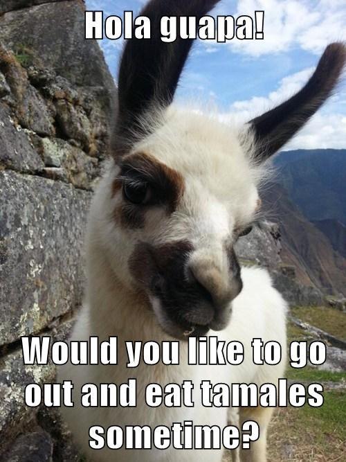 Flirty Llama | Know Your Meme Frog Puns