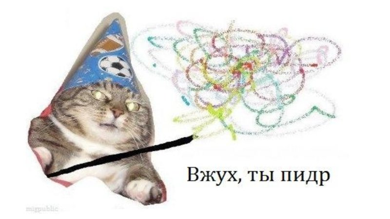 Say Hello to Russia's Wizard Cat