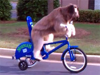 Norman the Dog Rides a Bike