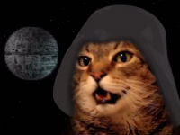 Cat Sings Star Wars Theme Song