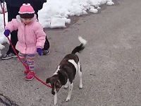 Baby Walks the Dog