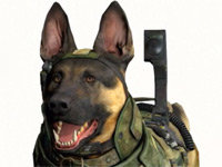 The Call of Duty Dog