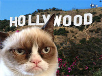 Grumpy Cat is Going to Hollywood