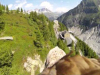 GoPro Gets Strapped to a Flying Eagle