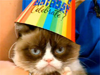 The World's Grumpiest Cat Turns Two