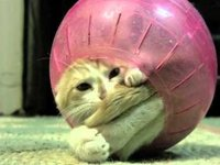 Kitten Rolls Around in Hamster Ball