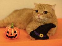 Nine Cats' Halloween Costume Fashion Show