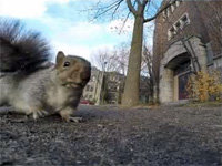 Squirrel Nabs a <i>GoPro</i>, Almost Gets Away
