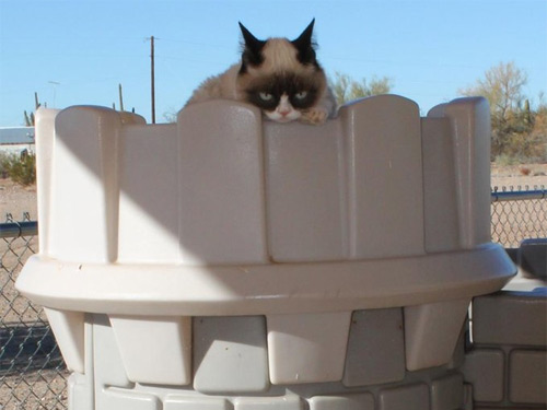All Hail Queen Tard the Grumpy Cat