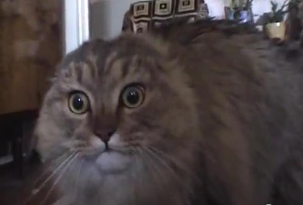 Image - 183913 | NONONONO Cat | Know Your Meme
