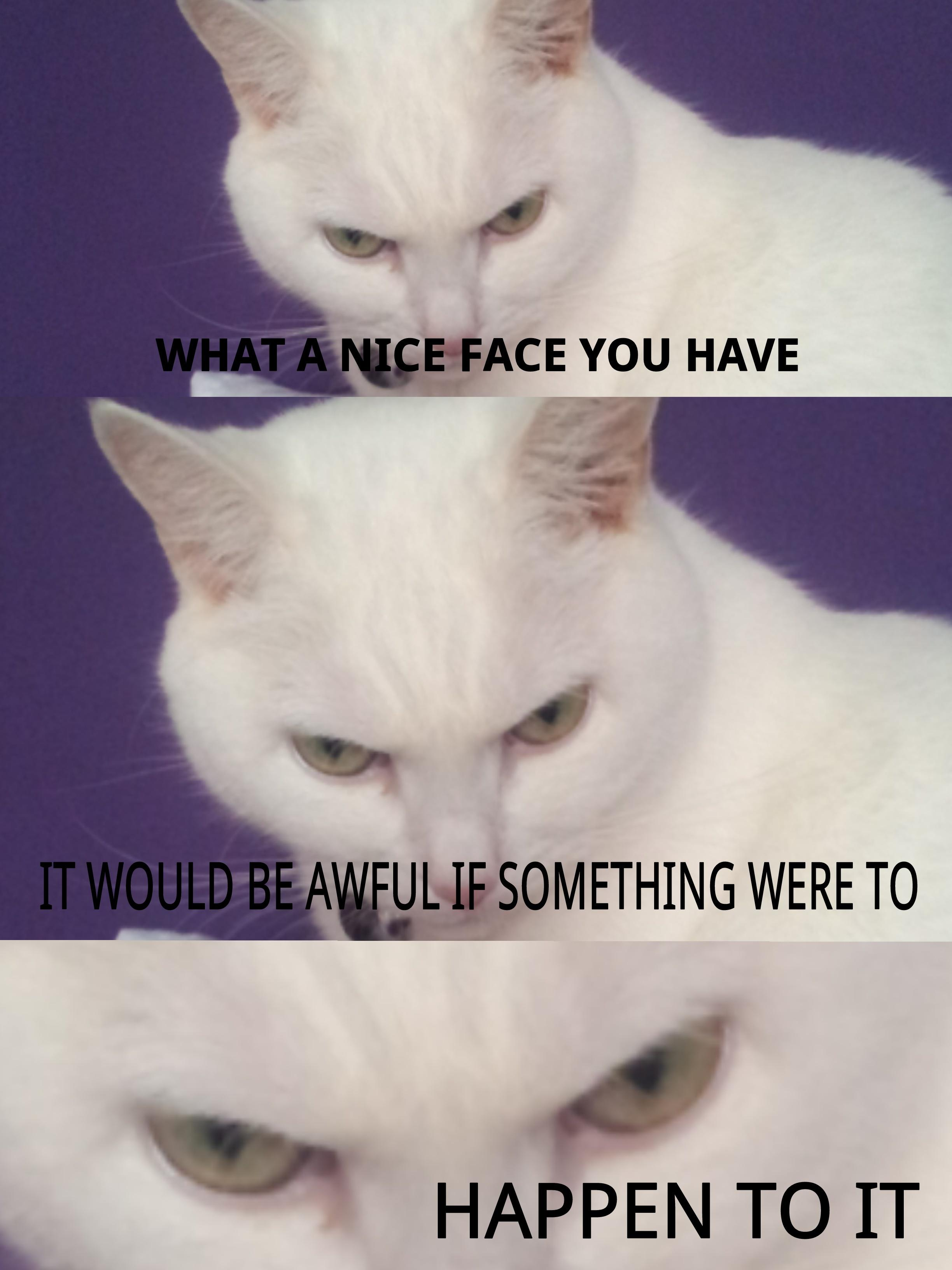 8f7 most recent cat memes 8f7 wallpaper