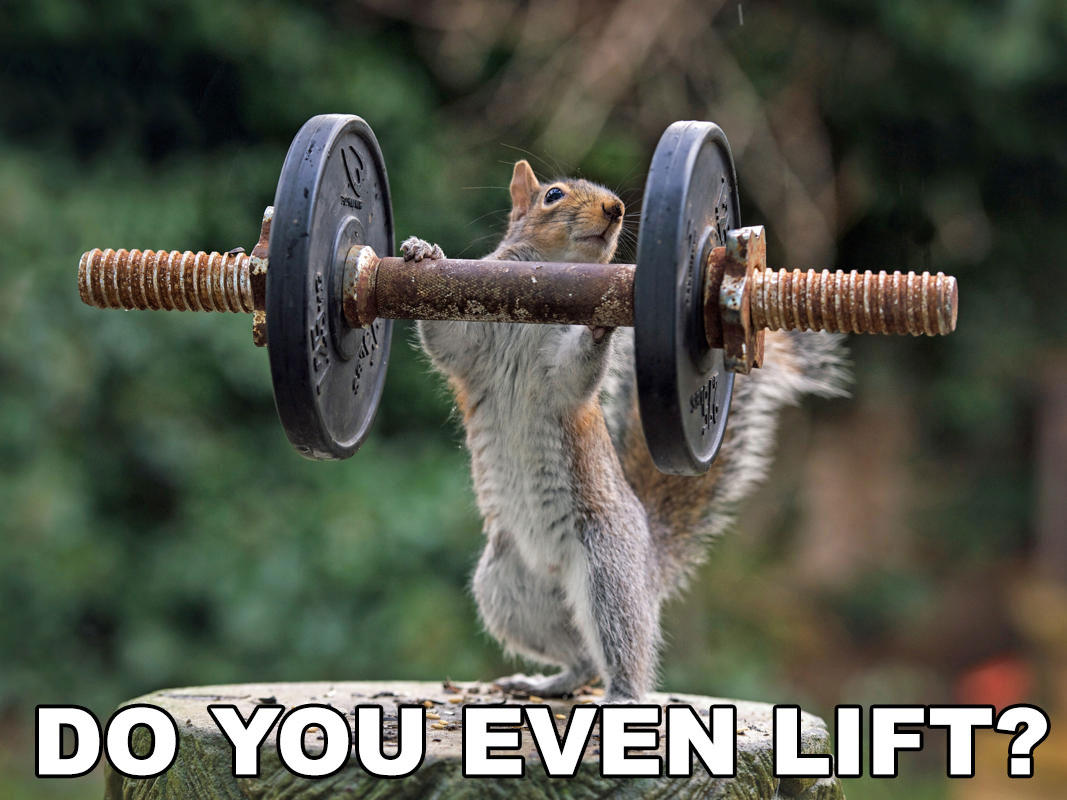 how to begin weight lifting