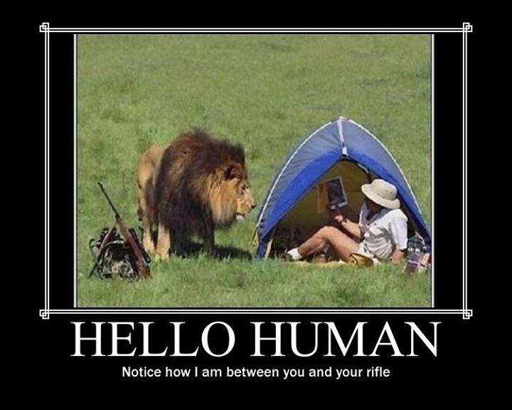 Lion Win Demotivational Posters Know Your Meme