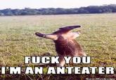 I'm an Anteater!!!