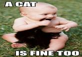 A cat is fine too....
