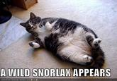 A wild Snorlax appears!