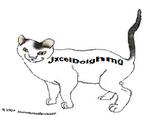 JxcelDolghmQ