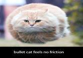 Bullet Cat