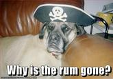 Why is the Rum Gone?