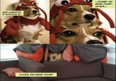 Dog Fort