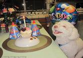 Birthday Dog