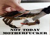 This Kills The Crab