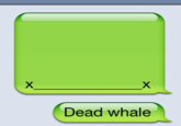 iPhone Whale