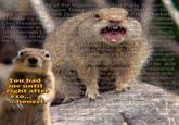Crasher Squirrel