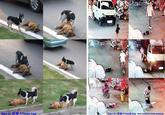 Toddler Hit-and-Run Tragedy / Wang Yue