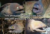 Bad Joke Eel