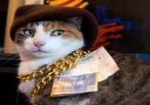 CashCats
