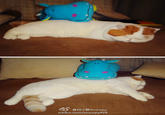 Snoopy the Cat