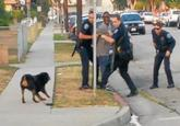 Hawthorne Dog Police Shooting
