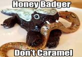 Honey Badger