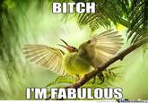 Bitch I'm Fabulous