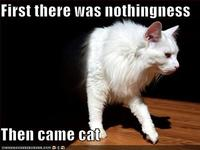 Funny-pictures-cat-comes-out-of-nothingness
