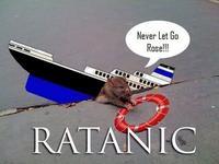 Sad Rat