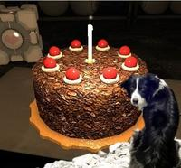Apathetic-dog-doesnt-care-about-cake-or-its-4022-1276888322-17