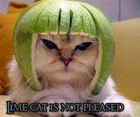 Trashcat Is Not Amused