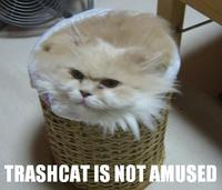 Trashcat Is Not Amused