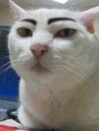Eyebrow Cat (眉毛猫)