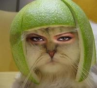 Limecat_in_contact_lenses