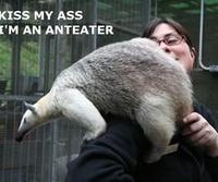 I'm an Anteater!!!
