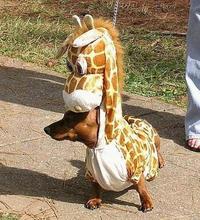 Man-Giraffe-Dog